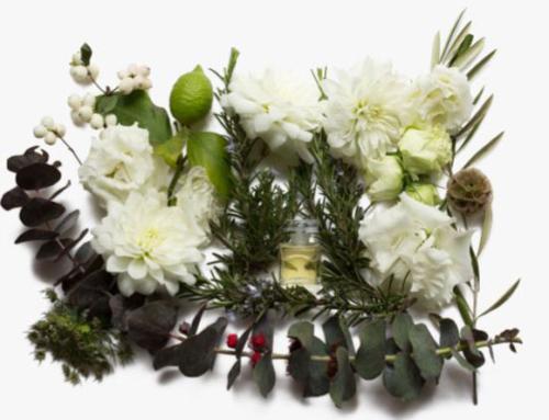 Scent, fragrance, perfume, olfactory…